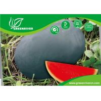 Wholesale Dark green Organic Watermelon Seeds with Sugar content 11.5% , Black from china suppliers