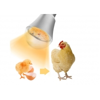 Wholesale Led Chicken Farm Light Waterproof Light Bulb Dimmable 9W Led Bulb Led Poultry Farm Light from china suppliers
