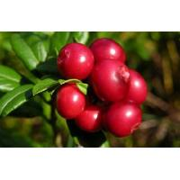Wholesale Lingonberry Juice Powder from china suppliers