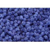 China Blueberry Concentrate on sale