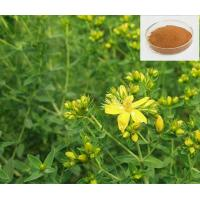Wholesale St.John's wort extract from china suppliers