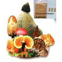 Wholesale Mushroom Powder & Mushroom Mycelium Powder from china suppliers