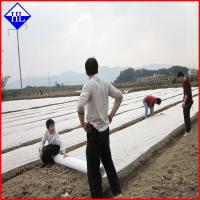Wholesale UV Protection Agriculture Non Woven Fabric , Greenhouse Plant Protection Cover Cloth from china suppliers