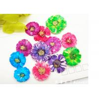 Small Daisy Natural Real Pressed Flowers True Plants Specimens For DIY Photo Frame