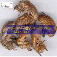 Wholesale Cicada Slough/ Periostracum Cicadae ( chan tui) from china suppliers