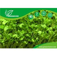 Wholesale organnic Radish sprouts seeds with ISO9001-2000 approvals , Green Black Yellow from china suppliers