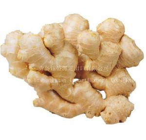 China Ginger, Fresh Ginger, Chinese Ginger on sale