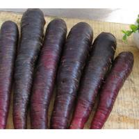 China Natural Black Carrot Extract for antioxidant supplements on sale