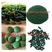 Wholesale Spirulina & Chlorella from china suppliers
