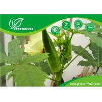 Wholesale Yellow Okra seeds / ladies finger seeds with FDA Certificate from china suppliers