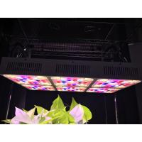 Wholesale 570W Full Spectrum LED Grow Lights CREE COB from china suppliers