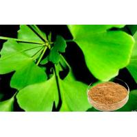 Wholesale EP9.0 Ginkgo Biloba Extract with CEP pharmaceutical grade from china suppliers