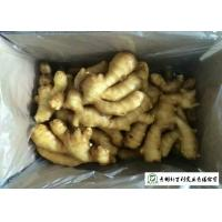 China Fleshy Organic Fresh Ginger , Juicy Old Ginger Common Cultivation Type on sale