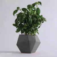 Wholesale Grey Cylinder Flower Concrete Plant Pots Irregular Pattern Home Decoration from china suppliers