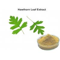 Wholesale Hawthorn Leaf Plant Extract Powder 3% Vitexin Lowering Blood Pressure And Blood Fat from china suppliers