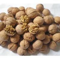 Wholesale Walnut Kernel Extract / Semen Juglandis Extract from china suppliers