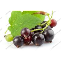 Wholesale Black currant anthocyanin from china suppliers