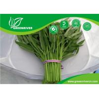 Wholesale Yellow Green lance leaf water spinach seeds in Prostrate type from china suppliers