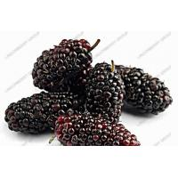 Wholesale Mulberry Juice Powder from china suppliers