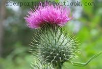 Wholesale Milk Thistle Extract from china suppliers