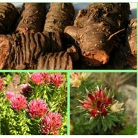 Wholesale natural herb medicine rhodiola 5 salidrosides from china suppliers