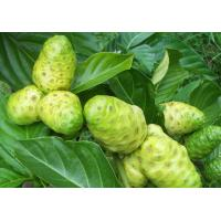 China 9%-20%Polysaccharides,Noni Extract,Noni Fruit Extract,noni juice powder,Morinda Citrifolia on sale