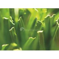 Wholesale Artificial Grass for Football, MT-Surf from china suppliers