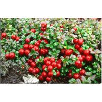 Wholesale Lingonberry anthocyanin from china suppliers