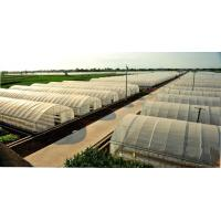 Wholesale Sunshine Restaurant Commercial Greenhouse , Outdoor Plastic Greenhouse Hot Galvanized Skeleton from china suppliers