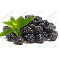 Wholesale Blackberry juice powder from china suppliers