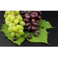 Wholesale Grape skin anthocyanin from china suppliers
