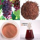 Wholesale Grape Seed Extract from china suppliers