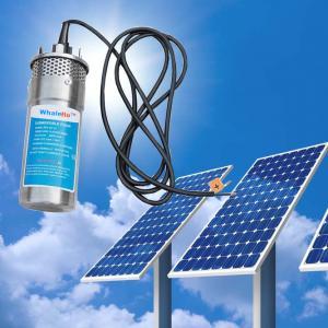 China Whaleflo 8LPM/12LPM/20LPM Stainless Steel Mini Solar Submersible Solar Water Pump 12V/24V on sale