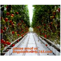 China Film Covering Tomato Planting Greenhouse,Tomato Greenhouse film, Plastic Polyethylene sheet 6 mil 4 year UV Resistant cr on sale