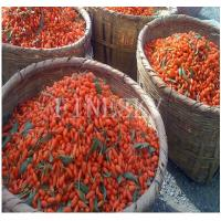 Wholesale Goji extract from china suppliers