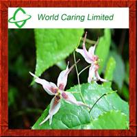 Wholesale High Quality Herbal Ingredient Epimedium extract 98% Icariin from china suppliers