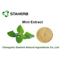 Wholesale Herbal Extract Mint Plant Extract Powder , Natural Herbal Extracts ISO Certified from china suppliers