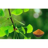 Wholesale CONBA Ginkgo Biloba Powder , Ginkgo Leaf Extract GMP Standard CHP2015 from china suppliers