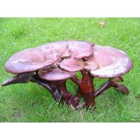 Reishi Mushroom P.E. Basic Parameters