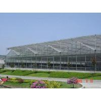 Wholesale Multi-spangreenhouse from china suppliers