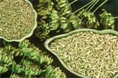 how to make dry fennel seeds