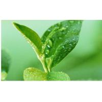 Wholesale Green Tea Polyphenols from china suppliers