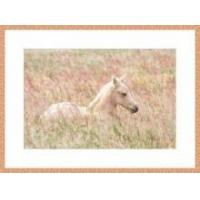 Buy cheap Colt in the Grass Framed Print from wholesalers