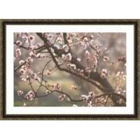 Buy cheap Apricot Branches in Bloom Framed Print from wholesalers