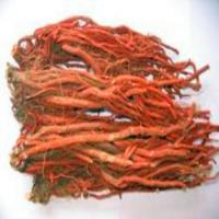 Wholesale Circulatory Health hs0232hs-Salvia Root P.E. from china suppliers