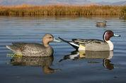 Wholesale AVERY GREENHEAD GEAR GHG LIFESIZE WOOD DUCK WOODIE DECOYS FIXED DURA-KEEL 6 73035 NEW! from china suppliers