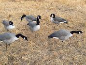 Wholesale AVERY GHG Greenhead FFD Fully Flocked FB HONKER FEEDER 6 PACK W/ 6 Slot Bag from china suppliers