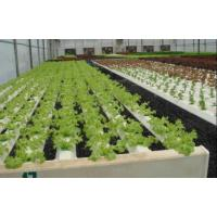 Wholesale Leaf Vegetable Greenhouse from china suppliers