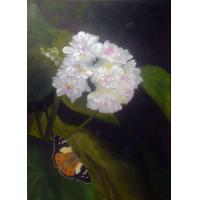 China Australian Admiral butterfly Original Oil Painting for sale $350Au on sale