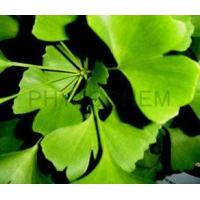 Wholesale Ginkgo Biloba Extract 24/6% from china suppliers